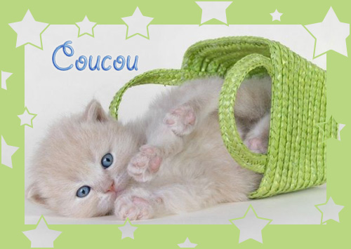 coucou-chat